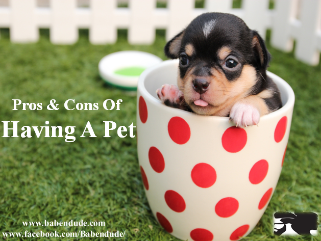 Pros And Cons Of Having A 'Pet' - BabeNDude